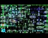dati/docupagelinks/ fractals -  Light - information - Love - creativity - Technology